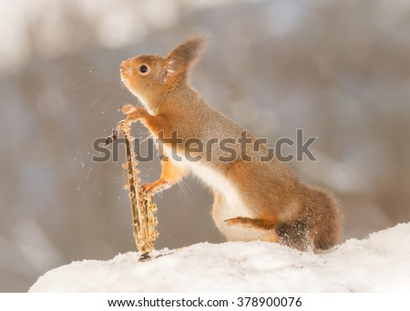 red squirrel in snow with a saxophone