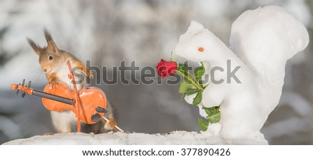 red squirrel in snow with ice squirrel rose and violin  - stock photo