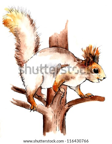 Red squirrel on the tree branch. Watercolor