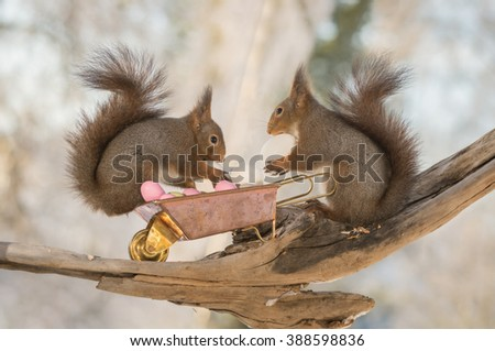 red squirrels with wheelbarrow and eggs  - stock photo