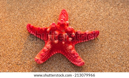 Red starfish on sand in natural sunlight  - stock photo