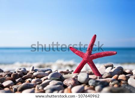 red starfish on the beach - stock photo