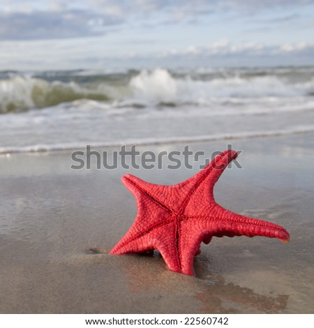 Red starfish on the beach