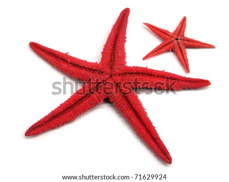 red starfishs on a white background - stock photo