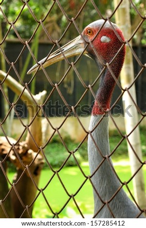 Red stork in the cage. - stock photo