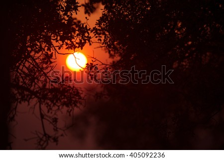 red sunset on the coast of the Mediterranean sea through the branches of trees - stock photo