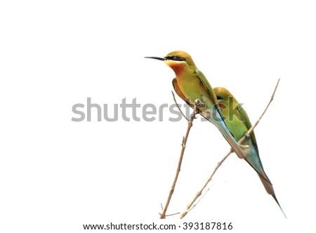 Mercado del colibrí --- El colibrí de Ana