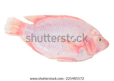 Red Tilapia, A Tropical  Fresh Water Fish