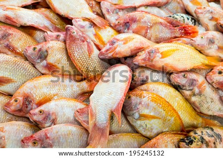 Red tilapia at the thailand fish market of samui island - stock photo