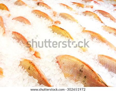Red Tilapia Fish Freezing on Ices. - stock photo
