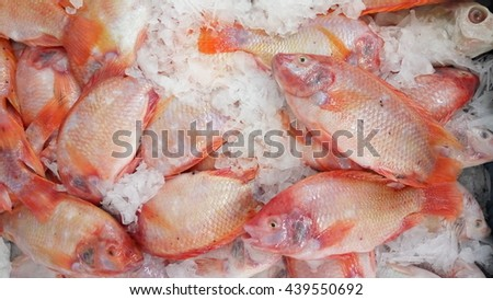 Red Tilapia Fish with Ice  - stock photo