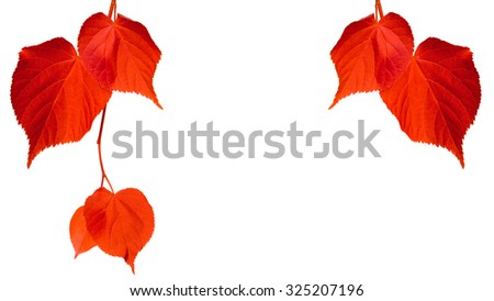 Red tilia leaves isolated on white background with copy space - stock photo