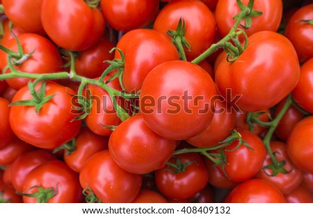Red tomatoes.  tomato