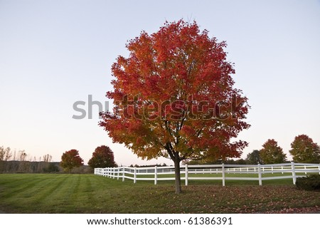 red tree in field with white fence at dusk during autumn, Vermont, USA