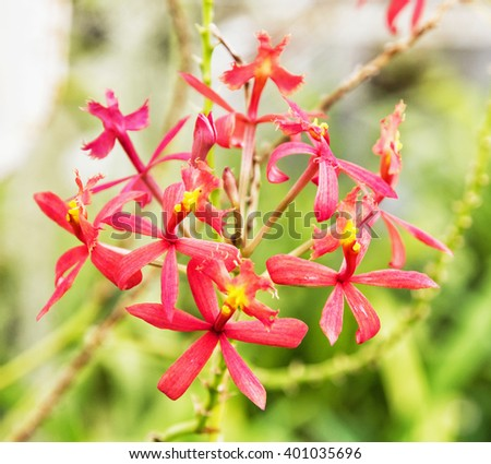 Red tropical flower. Detailed natural scene. Beauty in nature. - stock photo