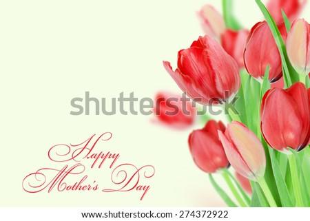 Red tulips. - stock photo