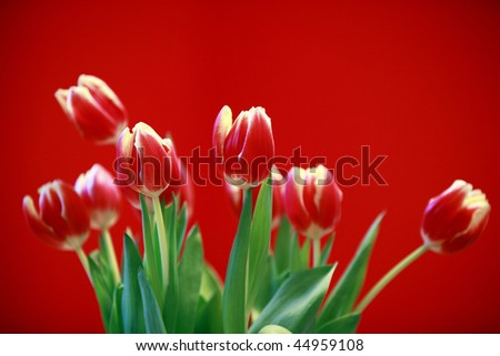 red tulips in a modern living-room