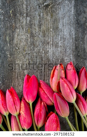 red tulips on rustic wooden surface - stock photo
