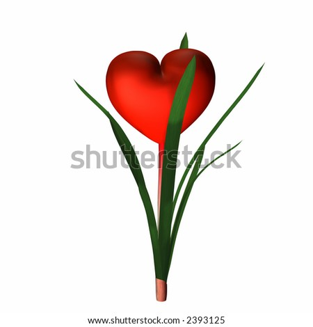 Red valentine heart in full bloom. Isolated on a white background. - stock photo
