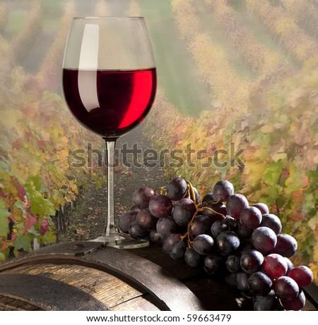 red vine with vineyard - stock photo