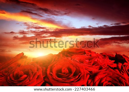 Red wet roses flowers on dramatic, romantic sunset sky. Great for Valentines day, Mothers day, wedding anniversary celebrations etc. - stock photo