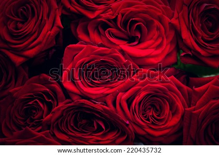 Red wet roses isolated on black background. Great as design element or greeting card for Valentines day, Mothers day, wedding anniversary celebrations etc. - stock photo