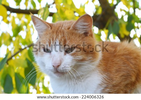 red & white cat on a background of yellow leaves. autumn - stock photo