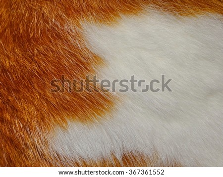 red white fur