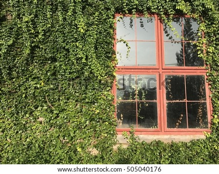 Red window on green wall