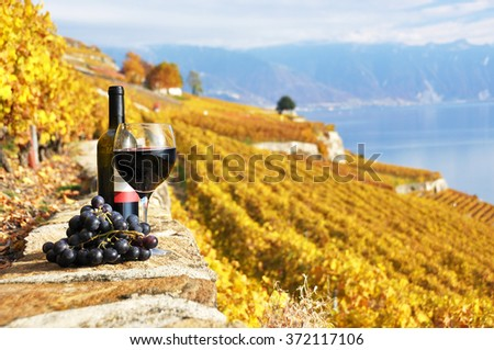 Red wine and grapeson the terrace vineyard in Lavaux region, Switzerland - stock photo