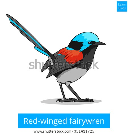Red Winged Fairywren Bird Learn Birds Educational Game Raster Illustration