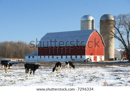 red Wisconsin dairy barn in winter with cows