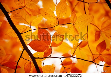 Red, yellow and orange autumn leaves fall background - stock photo