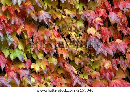 Red, Yellow, and Orange Leaves and Vines on Wall - Horizontal