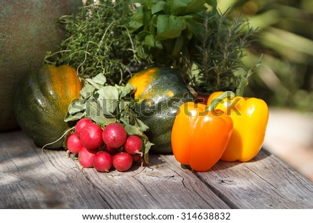 Red, yellow and orange peppers and radishes on a rustic table on a blurred background of herbs oregano, rosemary, thyme and basal
