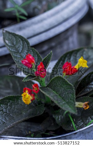 red yellow flowerz planted in pots