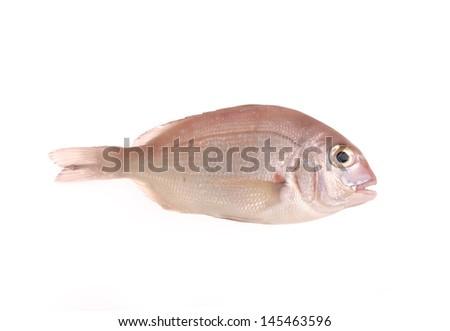 redband sea bream - stock photo