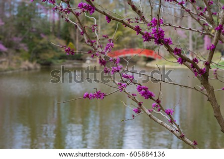 redbud tree in front of a red bridge lake and japanese garden duke gardens - Japanese Garden Cherry Blossom Bridge