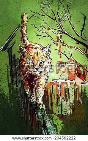 Redhead aggressive cat who guards his territory.                      - stock photo