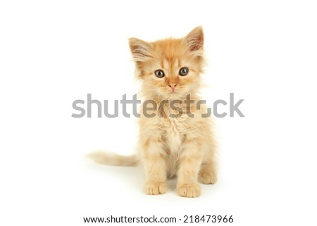 Redhead kitten isolated on white