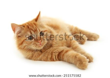 Redhead long hair kitten isolated on white - stock photo