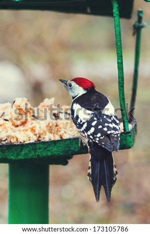 Redhead Woodpecker on the bird feeder (Dendrocopos major) - stock photo