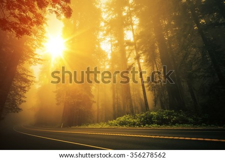 Redwood Foggy Sunset Scenery. Coastal Redwood Forest in the California State, USA. Redwood Highway - stock photo