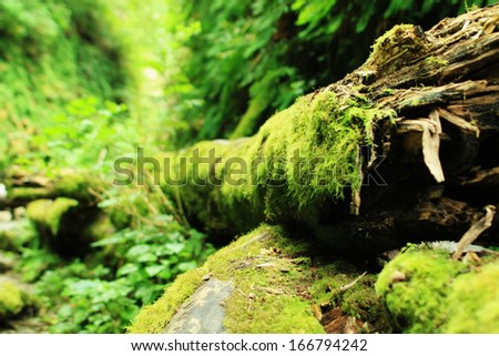 Redwood National Park 02 Moss covered tree in Fern Canyon California USA - stock photo