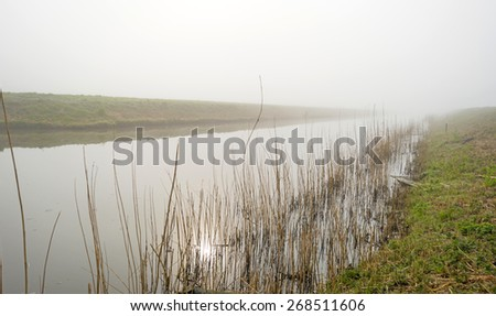 Reed along a sunny foggy canal in spring - stock photo