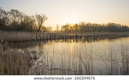 Reed along the shore of a lake at dawn - stock photo