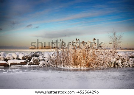 Reed and rocks by a lake in winter. - stock photo