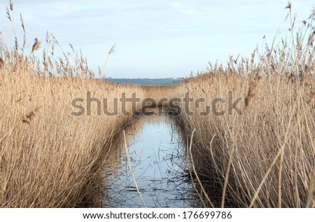 Reed bed and water in Sussex countryside - stock photo