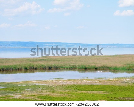 Reed belt of the lake Neusiedl, Burgenland.  - stock photo