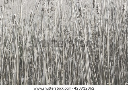 reed for background